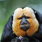 Saki Monkey - Singapore. by Ralph de Zilva