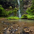 Mokoroa Falls Collection # 5 by Michael Treloar
