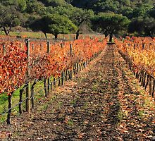 Vineyard Foliage by GreenSaint