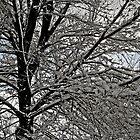 Snow Tree by David  Postgate