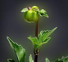 Soon I'll Be A Beautiful Flower by CarolM
