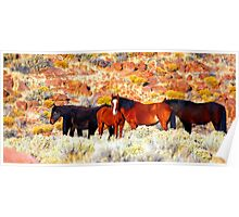 Wild Horses in Nevada Poster
