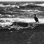 Cormorant by Val Blakely