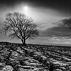 Malham Tree 02 - Yorkshire Dales, UK by Simon Lupton