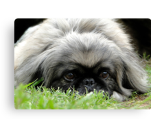 Sneak In The Grass Canvas Print