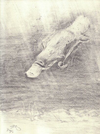 Platypus sketch - pencil by gogston
