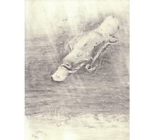 Platypus sketch - pencil Photographic Print