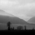 Foggy Afternoon by Tamara Brandy