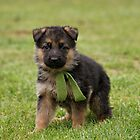 German Shepherd Puppies by Sandy Keeton