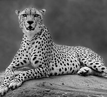 Beauty in Black & White by Mark Hughes