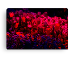 Vibrant Red - Floriade Nightfest, Canberra Australia. Canvas Print