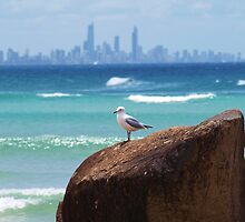 The Currumbin Watcher , Jonathon Livingston Seagull the Second  by Virginia  McGowan