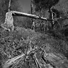Fallen Tree by Alexander Bampton