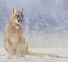 Mountain Lion in Winter Snowfall by Norman Rawn