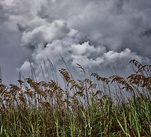 Sea Oats and Storm Clouds by jimcrotty