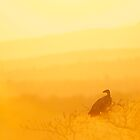 Vulture by Tweety300