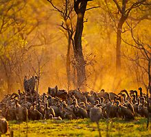 Vultures by Tweety300