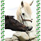 Connemara Pony Chistmas Card by ConnemaraPony