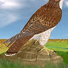 Red_tail Hawk by Walter Colvin