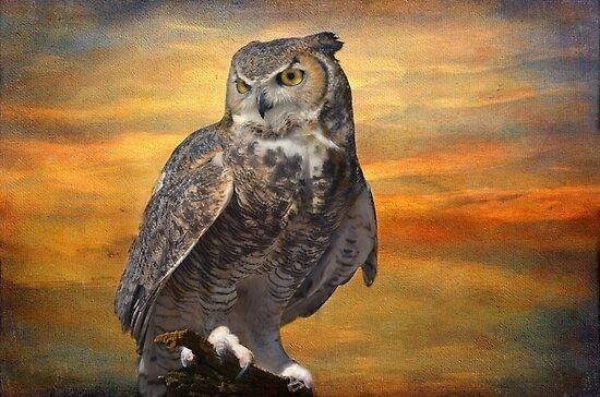 Owl on a Limb by Barbara Manis