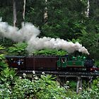 Puffing Billy, Dandenong Ranges by Kylie Reid