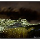Crocodylus johnstoni by bluetaipan