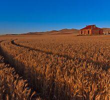 Sunset on Burra Homestead Ruin by pablosvista2