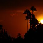 Sunset over the palms by Cleber Photography Design