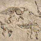 Breaking news:  Dinosaur dig unearths human skull! by Steve  Woodman