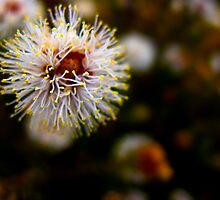 The Gum Flower by Shaynelee