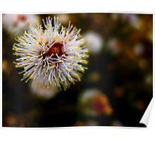 The Gum Flower Poster