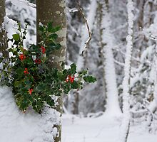 Hiver by rdalpes
