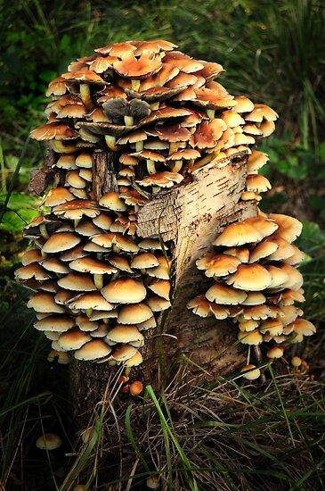 Multiple mushrooms by Javimage