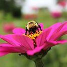 Bumblebee by astrochuck