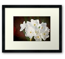Snow White Daffodils Framed Print