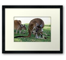 Mum, i need a bigger pouch, it's dark in here and i am getting cramps in my legs. Framed Print