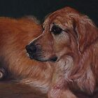 Pastel Painting - Golden Retriever by Sue Deutscher