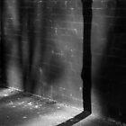 Shadows 1 by abocNathan