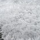 White Trees in Northern Muskoka by Carolyn  Reinhart