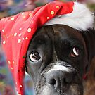 I&#x27;ve Been Good... Where&#x27;s My Treat? -Boxer Dogs Series- by Evita