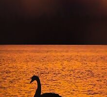 Sunset On Swan Lake (Fiery) by tmac