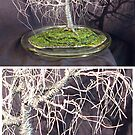POPLAR IN ROUND GLASS  - Wire Tree Sculpture, by Sal Villano  by Sal Villano