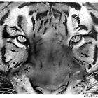 Tiger by WTWalters