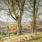 Trees in Glenprosen Angus Scotland by Joyce Grubb