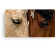 Face to Face Canvas Print