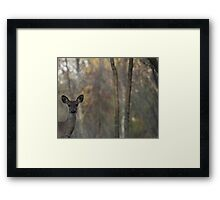 Deer is proud of his forest! Framed Print