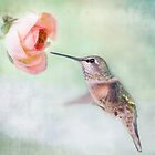 Hummingbirds of Southern California by Susan Gary