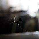 Spider by MuscularTeeth