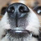 Wet Nose by Bami