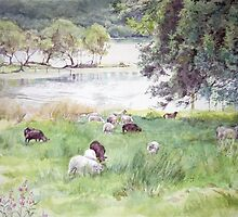 Sheep by Loch Ard Scotland by Joyce Grubb